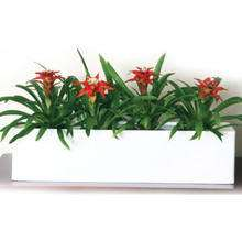 indoor plant hire Perth
